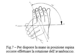 Fig.7 – Per disporre la mano in posizione supina
